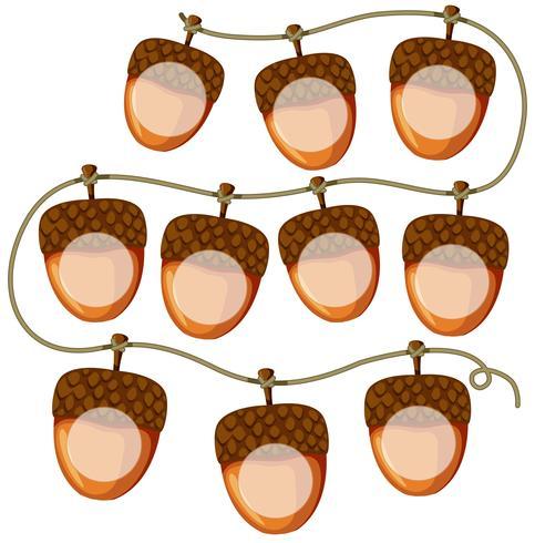 set of acorns on string