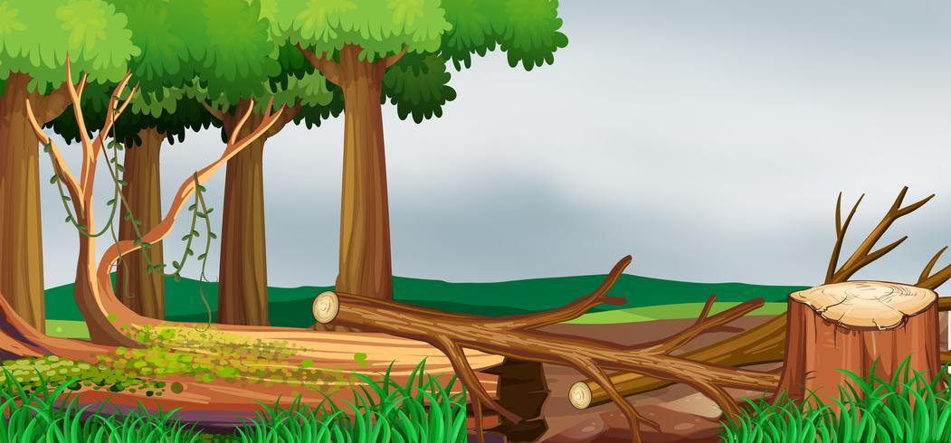 Cena com floresta e madeiras picadas