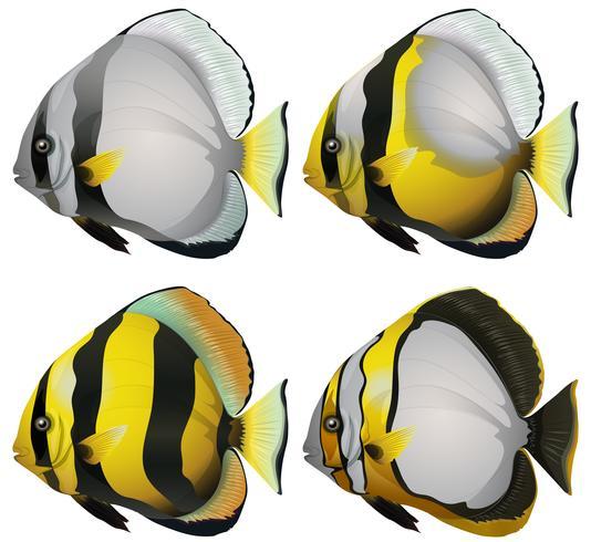 Quatro peixes