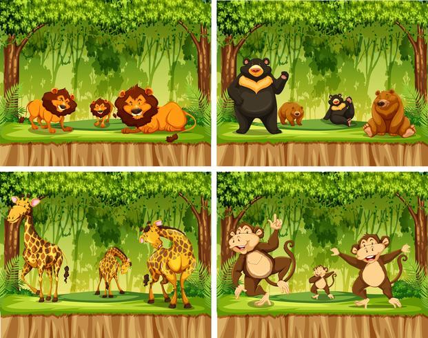 Conjunto de animal salvaje en bosque
