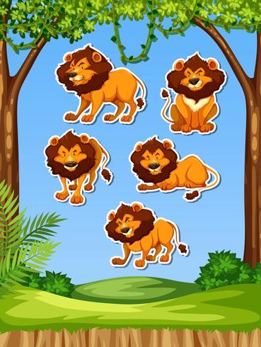 Löwe im Naturaufkleber