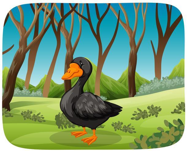 Um cisne negro no fundo da natureza