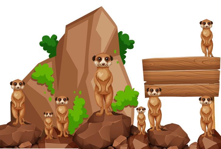 Placa de madeira com meerkats na rocha