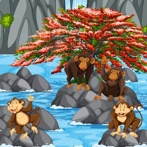 Vier apen bij de watervalscène