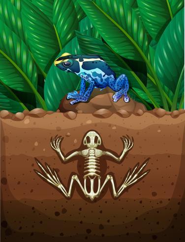 Grenouille au sol et fosil sous terre
