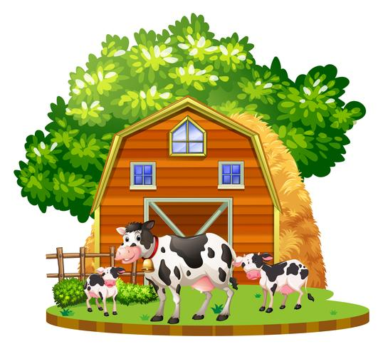 Les vaches vivent dans la basse-cour