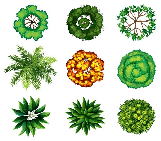 Eine Gruppe von Pflanzen vektor