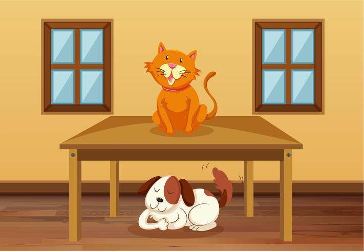 Katze und Hund im Zimmer