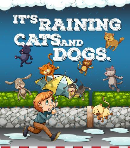 Cartel de idioma con lloviendo gatos y perros.