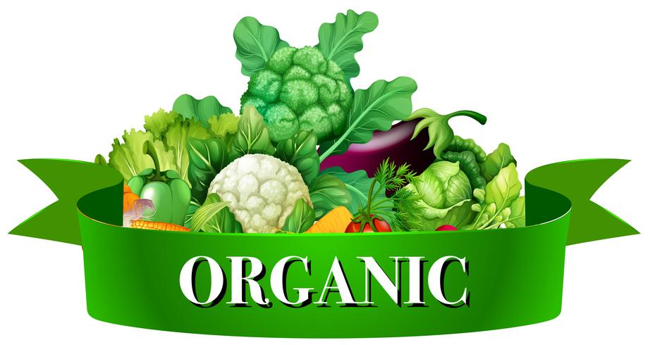 Fresh vegetables with banner vector