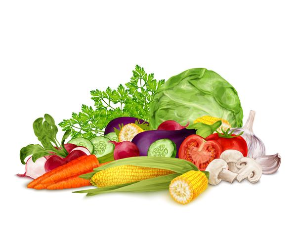 Fresh vegetables on white vector