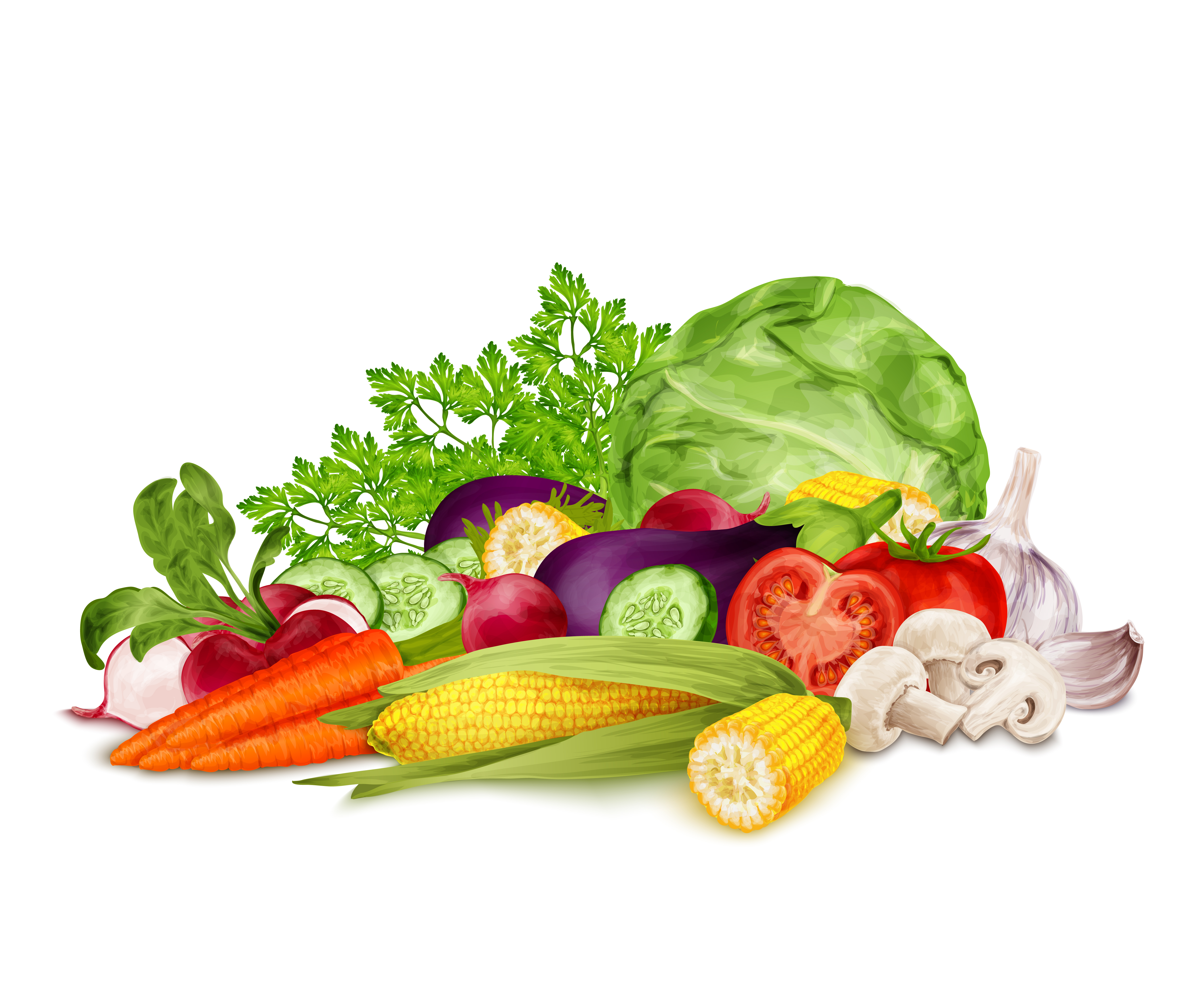 Fresh vegetables on white - Download Free Vectors, Clipart ...