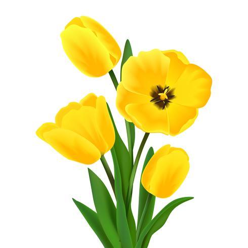 Buquê de flores de tulipa
