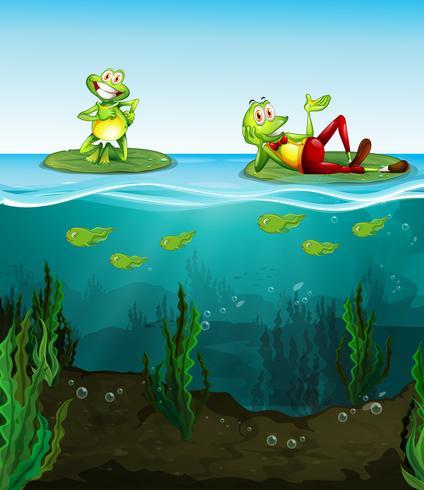 Två glada grodor och tadpoles i dammen