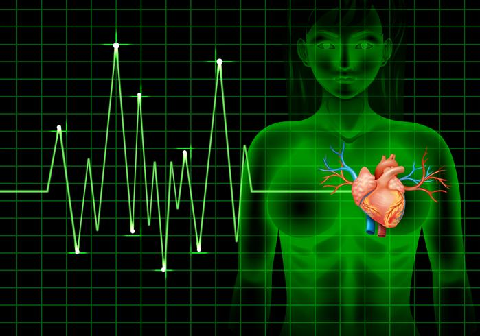 Heartbeat of human and graph vector