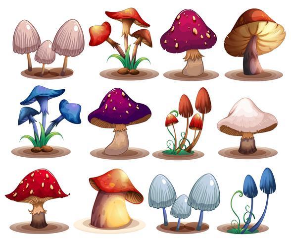 Set di funghi