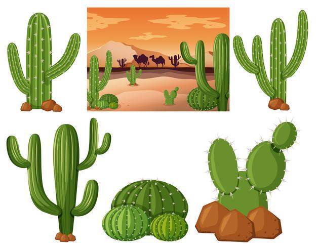 Campo do deserto com cactos