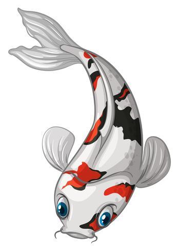 Gambar Ikan Koi Vector Gambar Ikan Hd