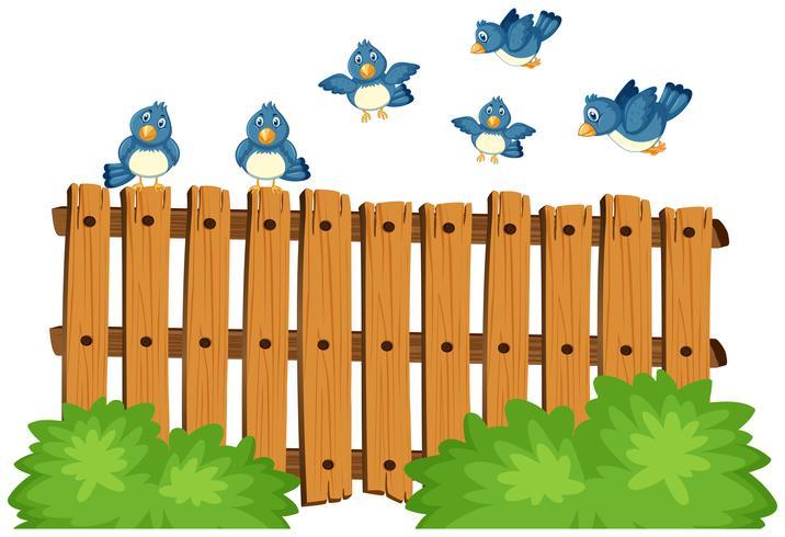 Blaue Vögel fliegen über Bretterzaun