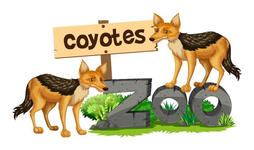 Coyotes en el cartel del zoológico.