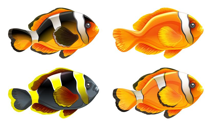 Vier kleurrijke vissen