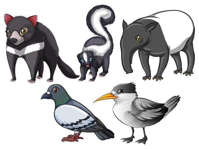Flashcard av djur och fåglar med grå färg tema