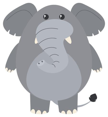 Éléphant gris sur fond blanc