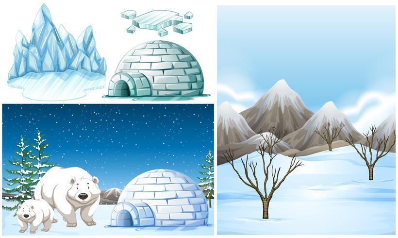 Polar bears and igloo on snow field