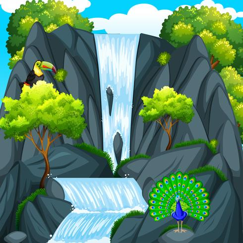 Toucan bird at the waterfall