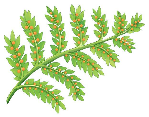 Une plante de fougère