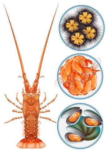 Quattro tipi di frutti di mare sul piatto vettore