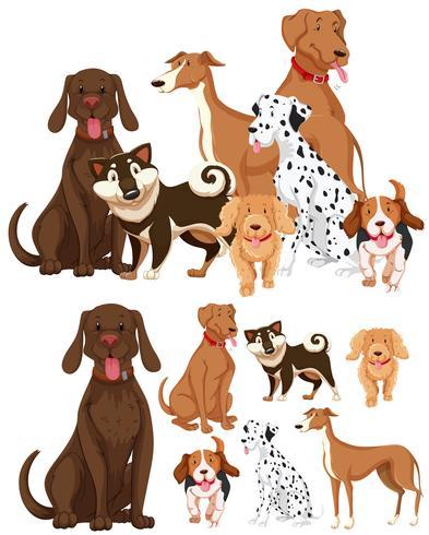 Många typer av hundar