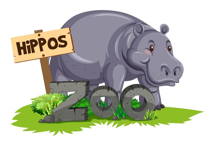 Vild flodhäst i djurparken