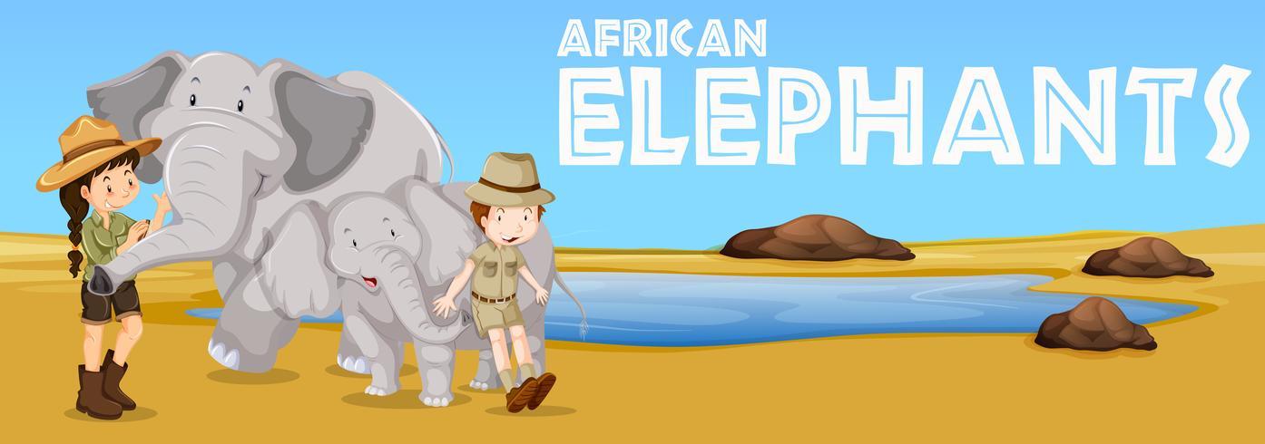 Elefanti africani e persone nel campo