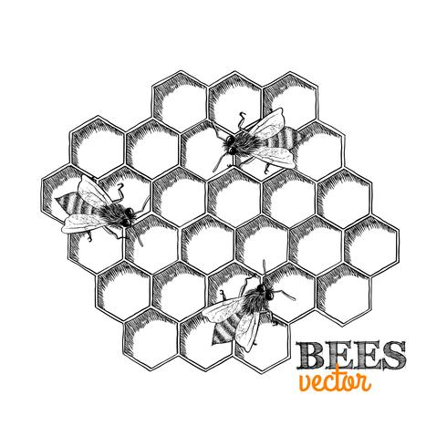 Honey bees and honeycomb vector