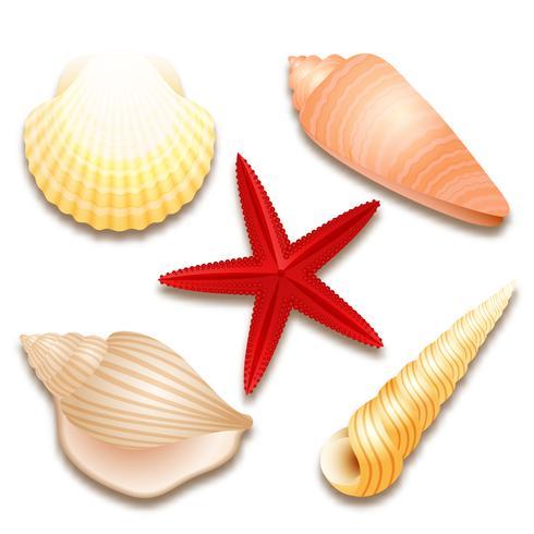 Conjunto de conchas e estrela do mar vermelha