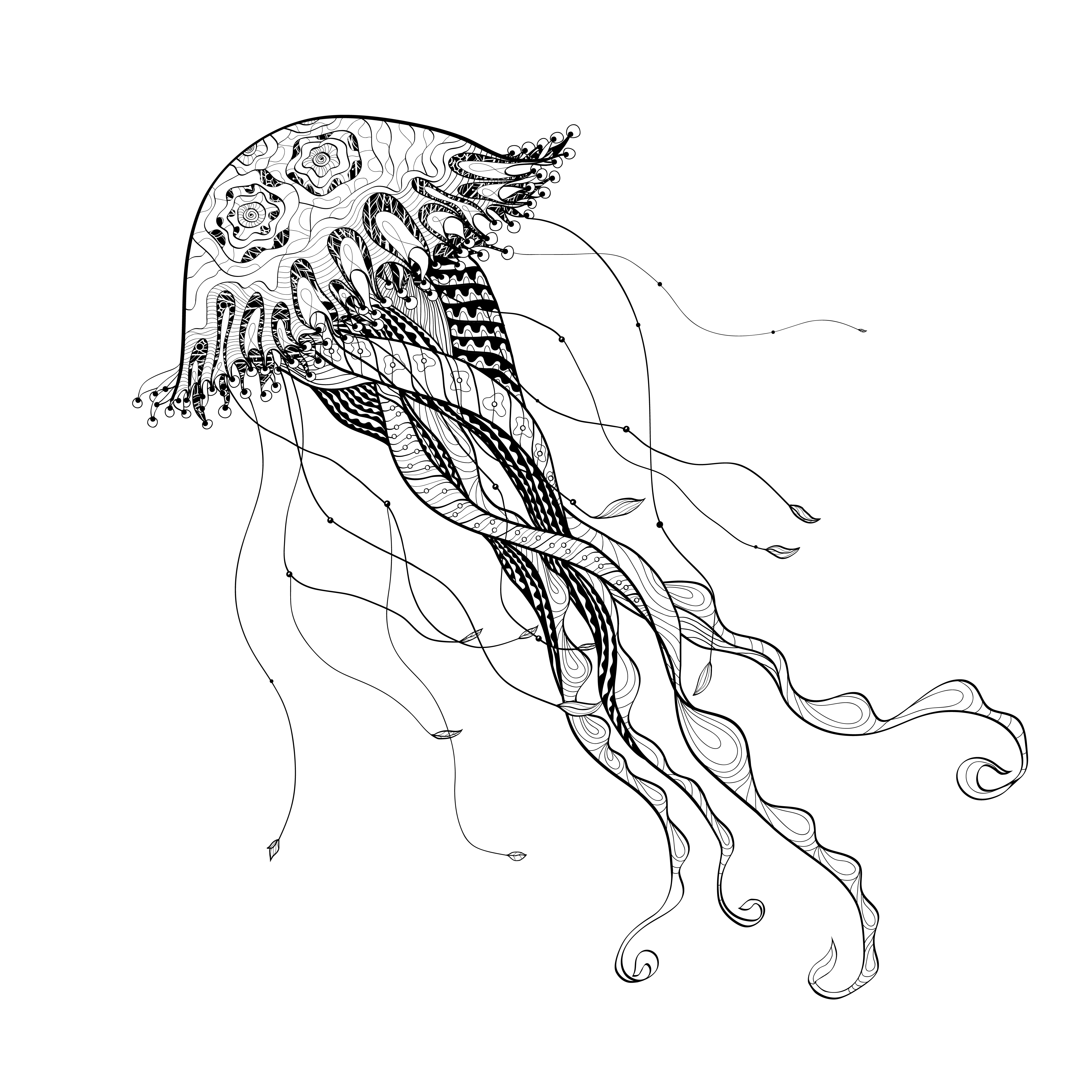 It is a graphic of Wild Jellyfish Line Drawing