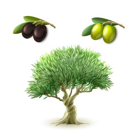 Conjunto de productos primarios de aceite de oliva. vector