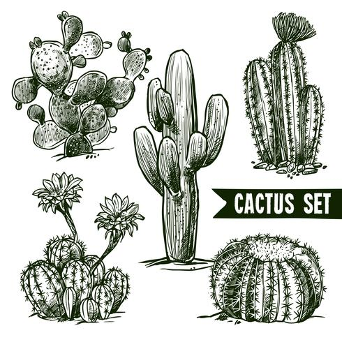 Cactus skissuppsättning vektor