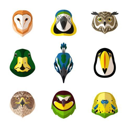 Conjunto de aves selvagens