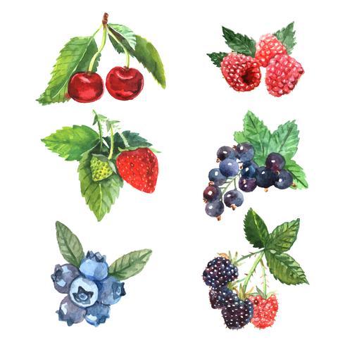 Akvarell Berry Set vektor