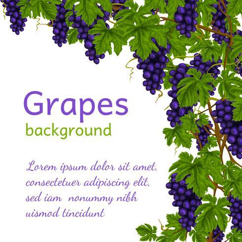 Fondo de pantalla de uvas vector
