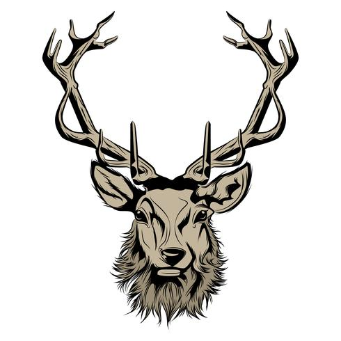 head of deer illustration