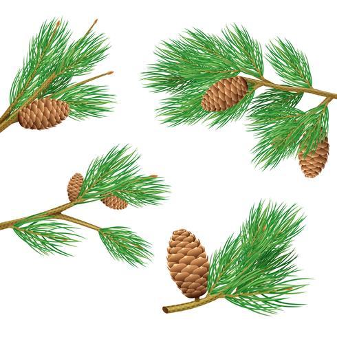 Conjunto de ramas de pino
