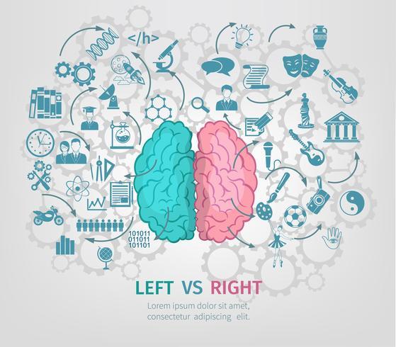 Menselijk brein concept