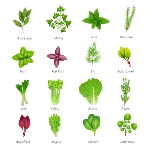Conjunto de iconos de hierbas