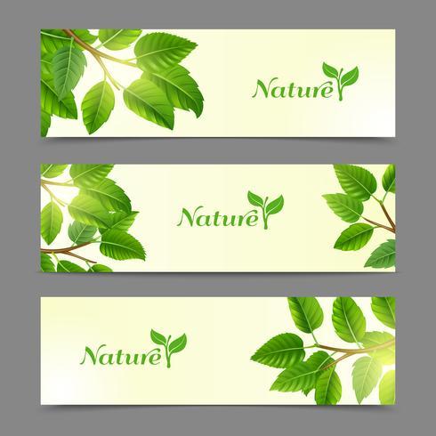 Groene bladeren eco banners instellen vector