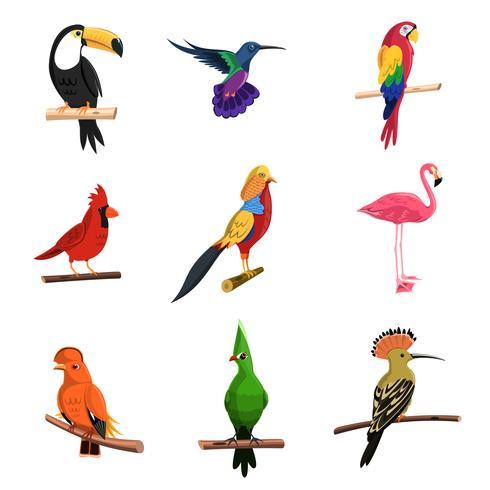 Conjunto de pájaros exóticos vector