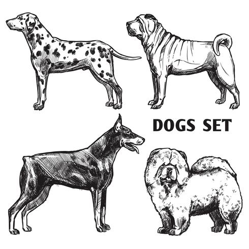Schets honden portret set vector
