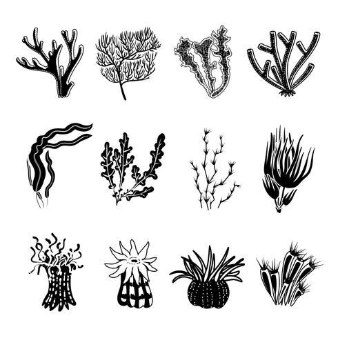 koraal zwarte set vector